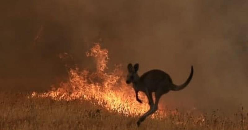 Nearly 200 People Arrested Across Australia For Deliberately Starting Bushfires