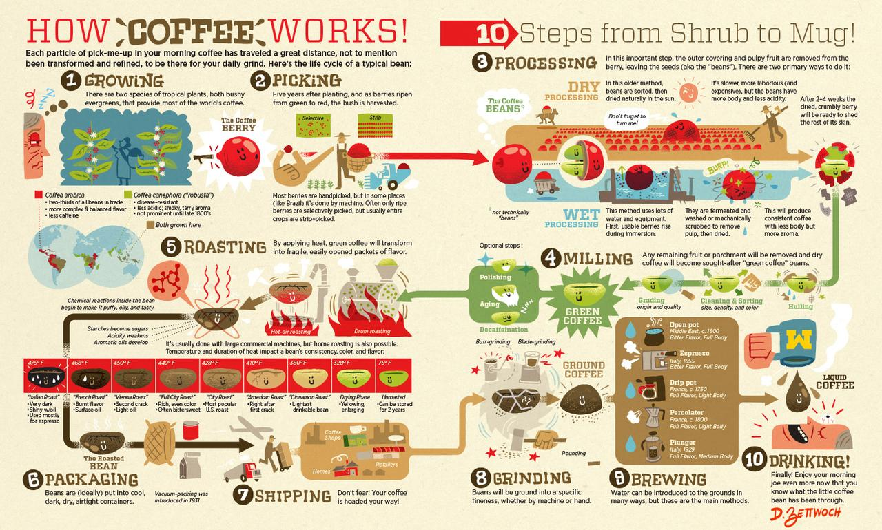 From Bean To Brew: Visualizing The Coffee Supply Chain