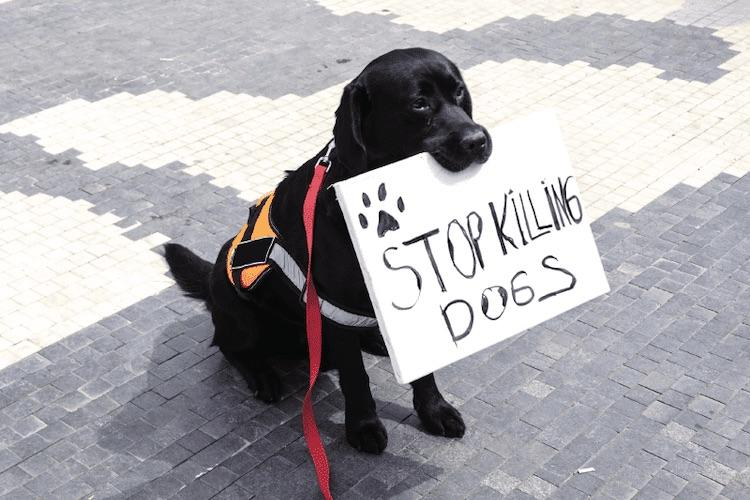 The Growing Epidemic Of Cops Shooting Family Pets  Stop-Killing-Dogs