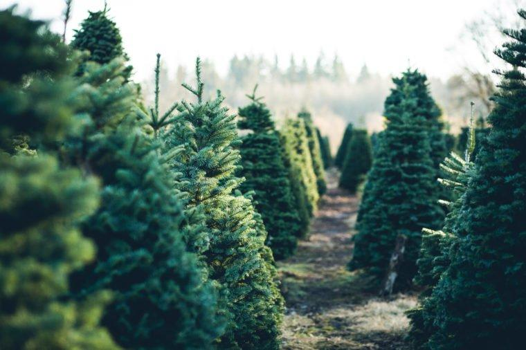 2019 Will Be The Most Expensive Season For Christmas Trees In History