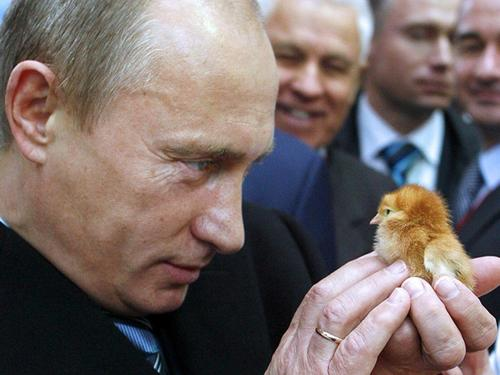 First Human Cases Of H5N8 Bird Flu Reported In Russia