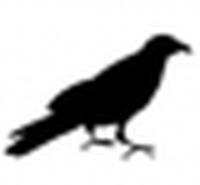 Profile picture for user quoth the raven